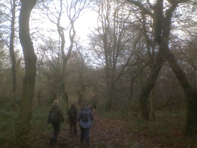 Through a wood Hurst Green to Oxted
