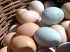 Bolivia - Sucre - Tarabuco Market - Blue Eggs