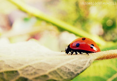 Busy Bug