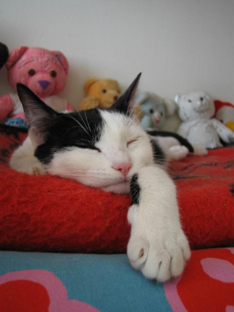 Il Belladdormentato Nel Bosco Beautiful Asleep In The Woo Flickr