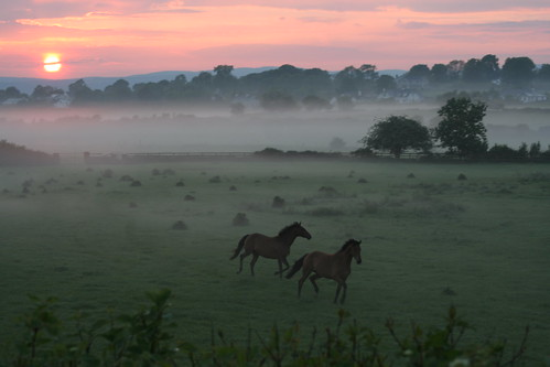 Horses at Sunset 2