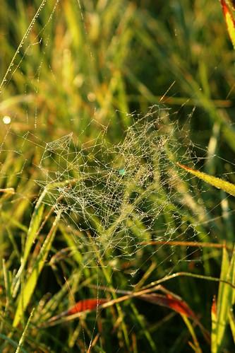 spiderweb earlymorning september 2008 firstlight mora touchoffrost myminnesota dewandfrost