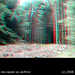 3D tree felling (anaglyph)