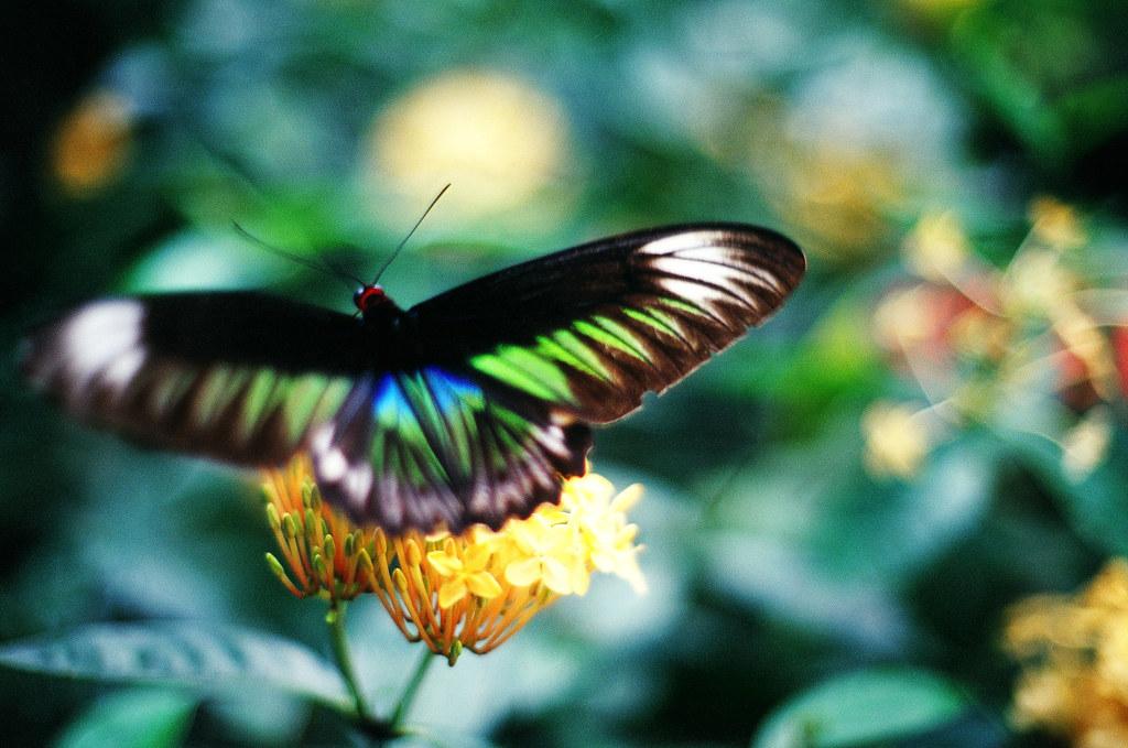 Butterfly motion bokeh