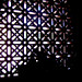 Small photo of Sombras en la Celosia