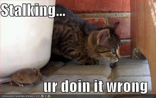 stalking kitteh