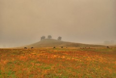 Eldorado Hill in the Fog by Rich Baum