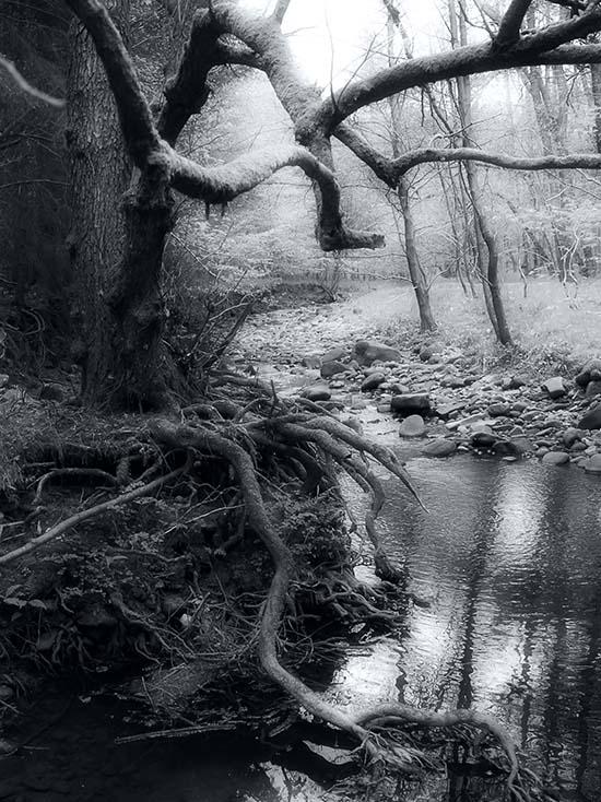 Photography - Trunk by Nicholas M Vivian