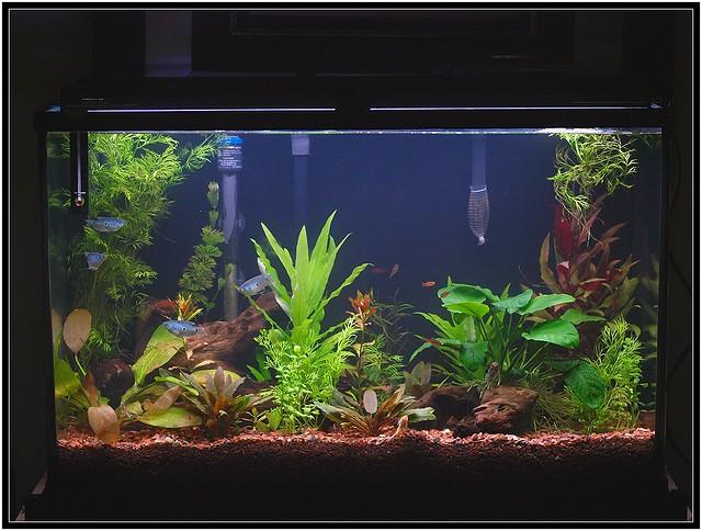 Planted 29 gallon aquarium Flickr - Photo Sharing!