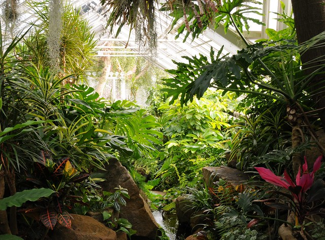 It 39 s like a jungle sometimes flickr photo sharing for Garden pool doomsday preppers