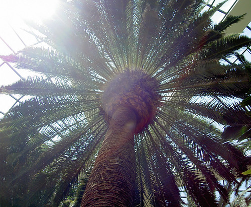 Palm Tree Symbolism Symbolic Meanings Blog By Avia