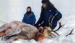 animal cruelty stories