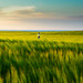 Catcher in the Rye by priit p