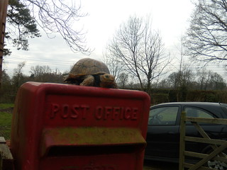 Tortoise on postbox