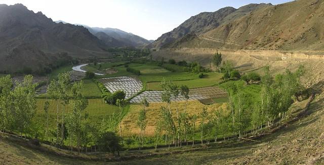 Mountain rice paddies.