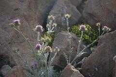 Flora of the High Atlas Morocco 2008