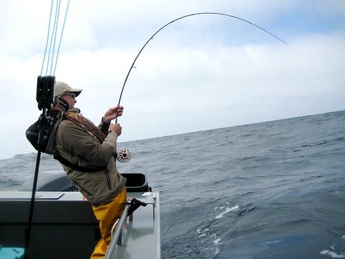 Oregon albacore tuna success 45 miles off newport the for Oregon tuna fishing report