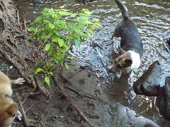 Mossprae Falls 065