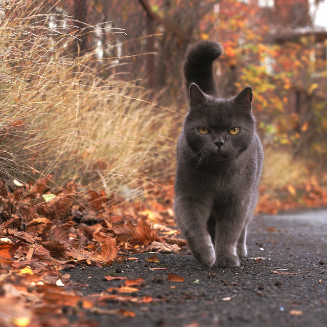 the autumn cat