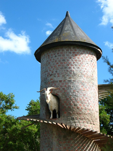 welcome! goat in the tower