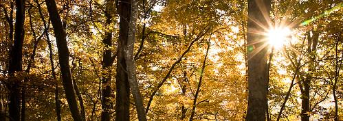 autumn usa fall colors ga foliage