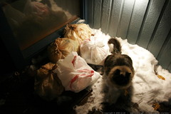 disposal of waste is one of the top eight survival p…