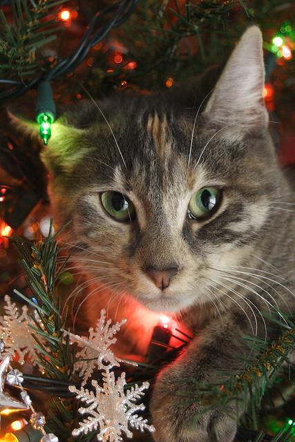 IMG_7263Gracey in christmas tree08