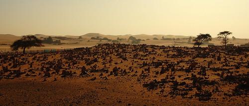 africa paisajes sahara desert oasis desierto invierno 2009 dunas worldheritage mauritania mauritanie cementerios flaga patrimoniodelahumanidad d40 desiertos chinguetti adrar ph498