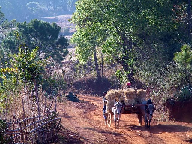 Early hour farmhands