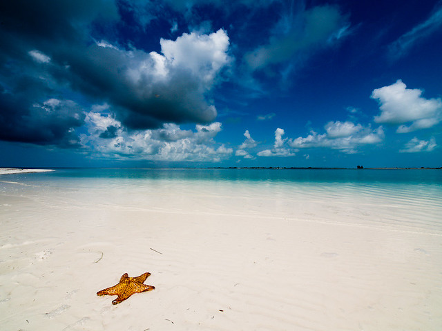 Playa paradiso with starfish