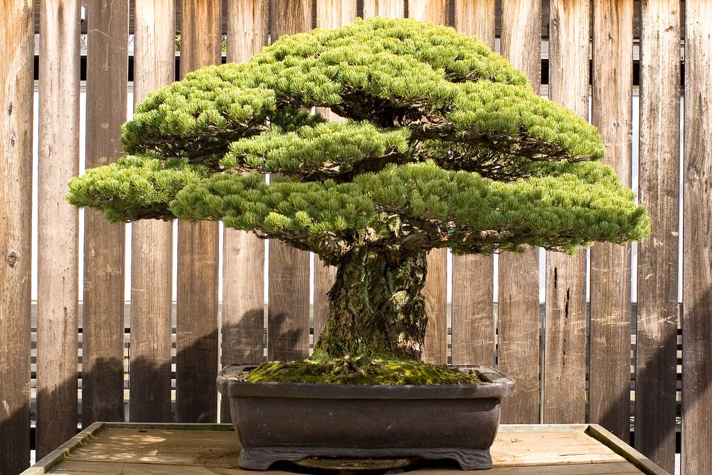 2343383001 2e4d9156a5 b This Bonsai Masters Greatest Work of Art is a Loving Tribute to his Grandkids