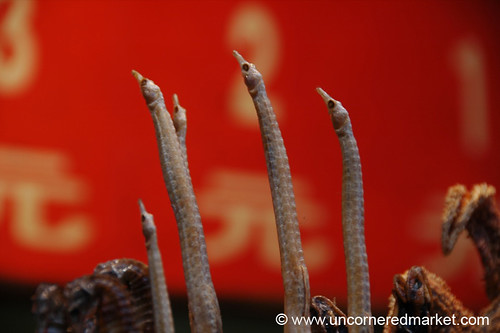 Seahorses for Dinner - Beijing, China