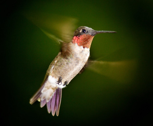 Another Hummingbird