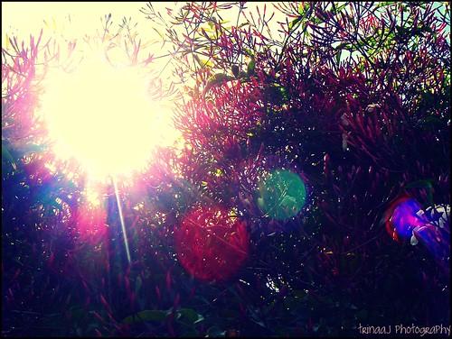 Jazzy Jasmine Sun Flares