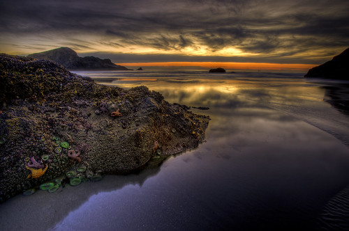 Goodies left after the tide went out :: HDR