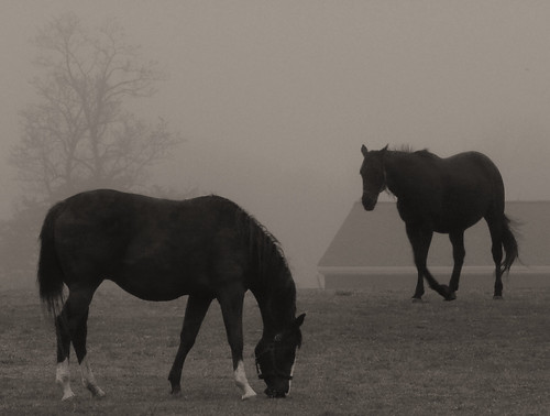 Tree through the mists & a couple horses by joiseyshowaa