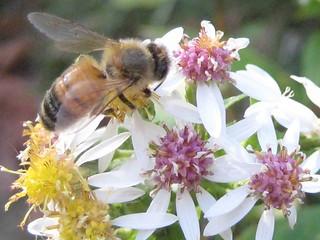 Image of Peanut Leap Cascade. park flower hike bee palisades peanutleapcascade