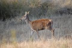 antelope(0.0), white-tailed deer(0.0), animal(1.0), prairie(1.0), deer(1.0), waterbuck(1.0), fauna(1.0), savanna(1.0), grassland(1.0), safari(1.0), wildlife(1.0),
