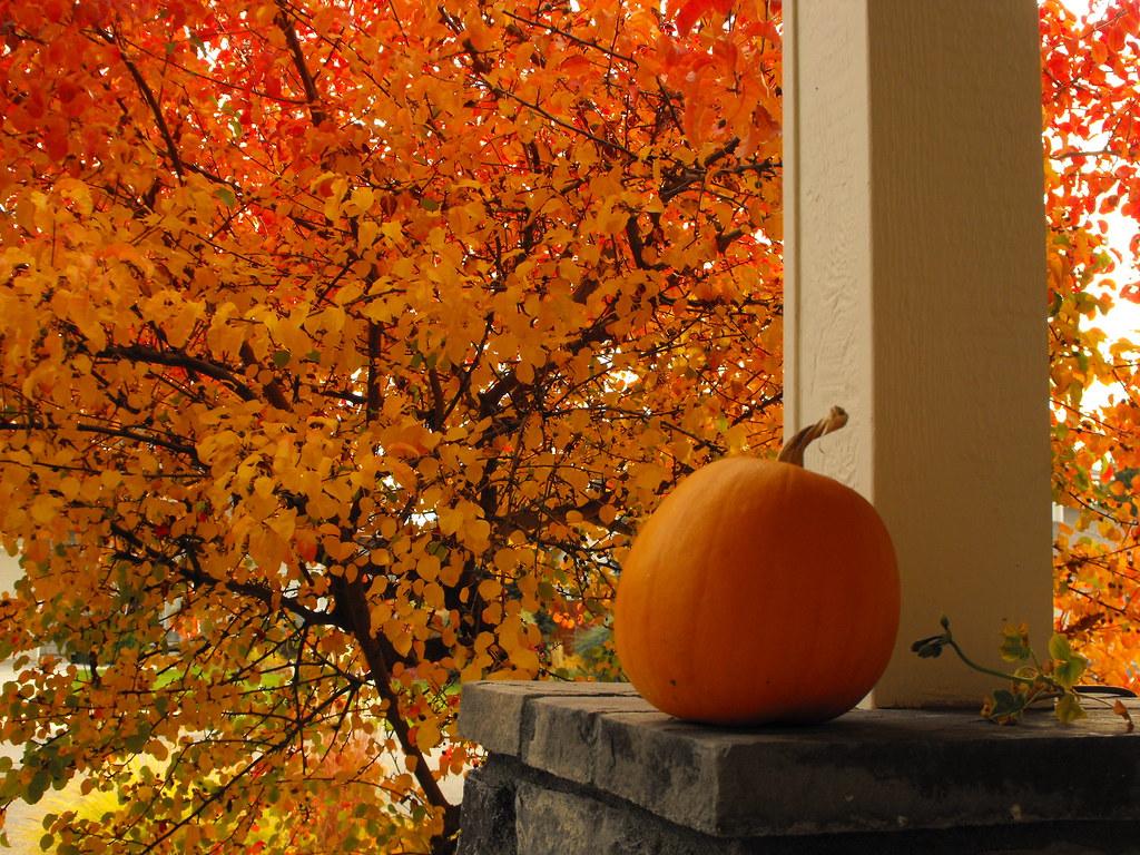 Porch Pumpkins - cover