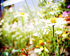 *Flowers* Vista Quest VQ1005