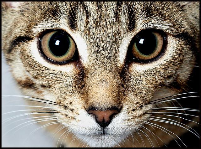 1596 Cat's Eyes