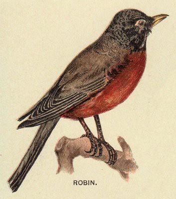 Vintage Robin Illustration | Flickr - Photo Sharing!
