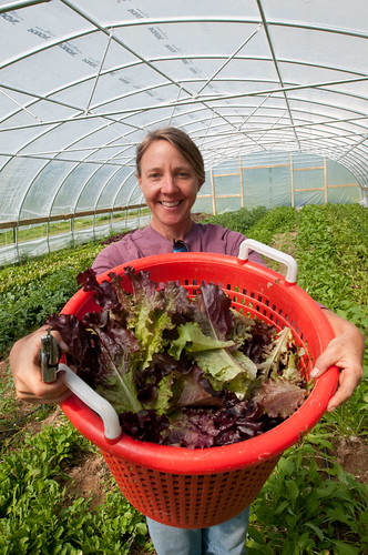 Owner Amy Hicks harvesting organic greens at her farm. Every operation that applies for organic certification is first inspected onsite by a certifying agent. These comprehensive top-to-bottom inspections occur annually to maintain certification. USDA Photos by Lance Cheung