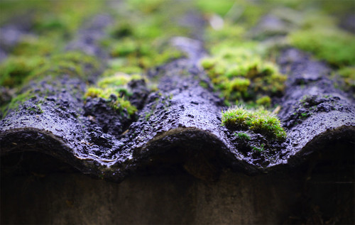 Asbestos Roof With Moss