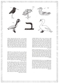 bird dictionary