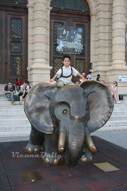 elefant, museum