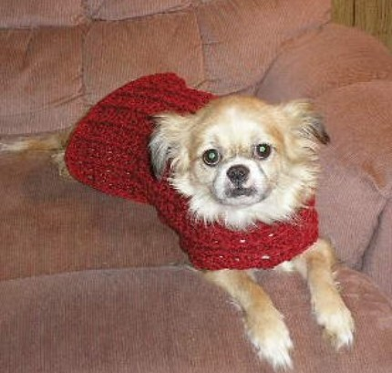 Free Crochet Patterns Dog Sweaters Large Dog : Crochet Dog Sweater~ Small Flickr - Photo Sharing!