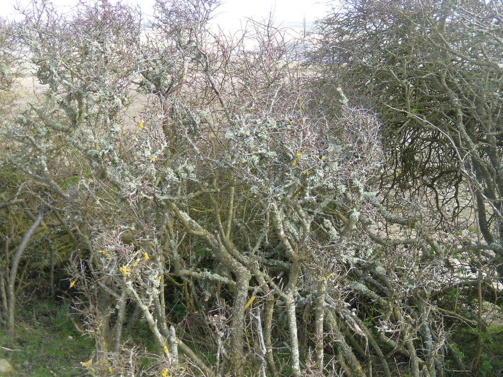 Lichen Seaford to Eastbourne