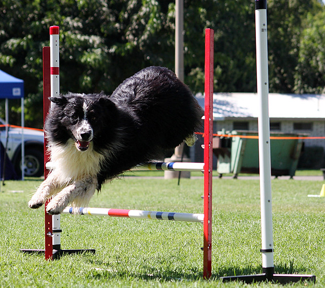 Turlock Dog Show