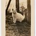 white kitty of the suburban jungle